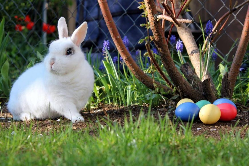 Mit tojik a húsvéti nyuszi?